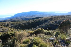 The beauty of the Denniston Plateau.  Photo: Forest & Bird