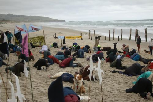 It looks a bit nippy at Dunedin's St Clair beach, but that didn't stop these #HeadsInSandNZ participants